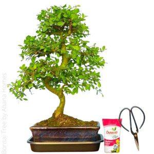 Bonsai Tree by Abana Homes