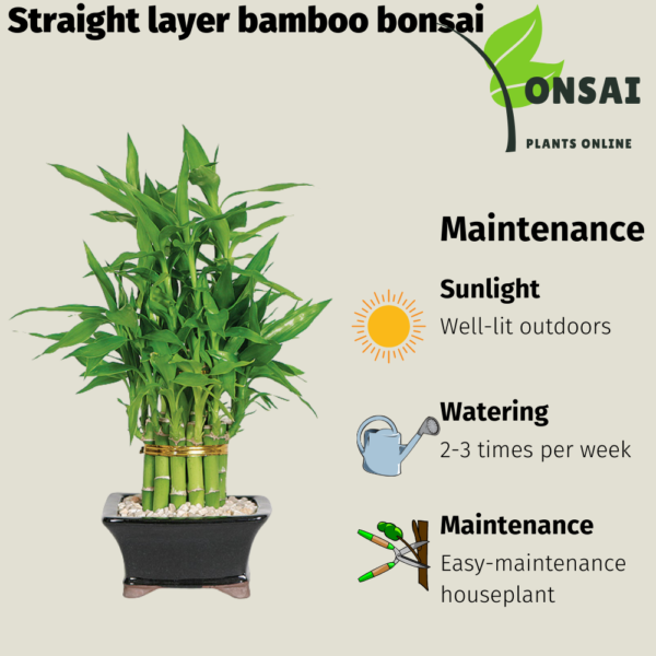 Get the straight layer bamboo bonsai
