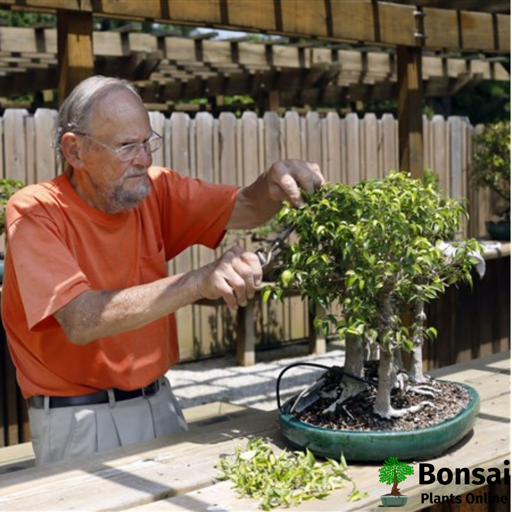 Caring for Indian Hawthorn bonsai tree