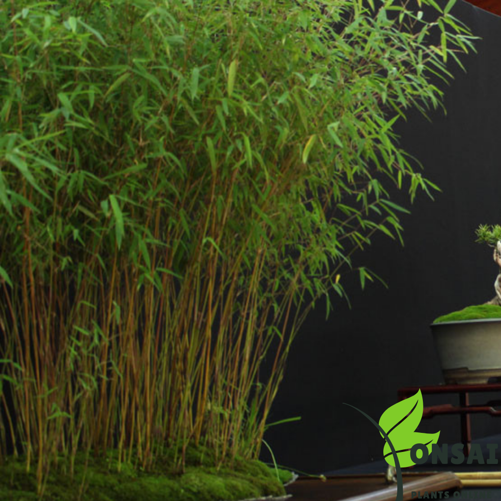 Elegant and lucky straight layer bamboo bonsai