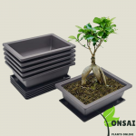 Get the mica bonsai pots