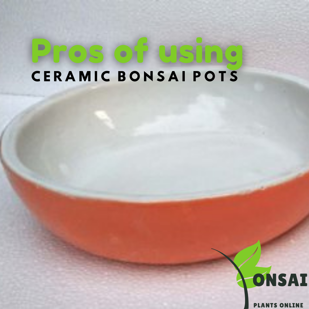 Ceramic bonsai pots with multifold advtages