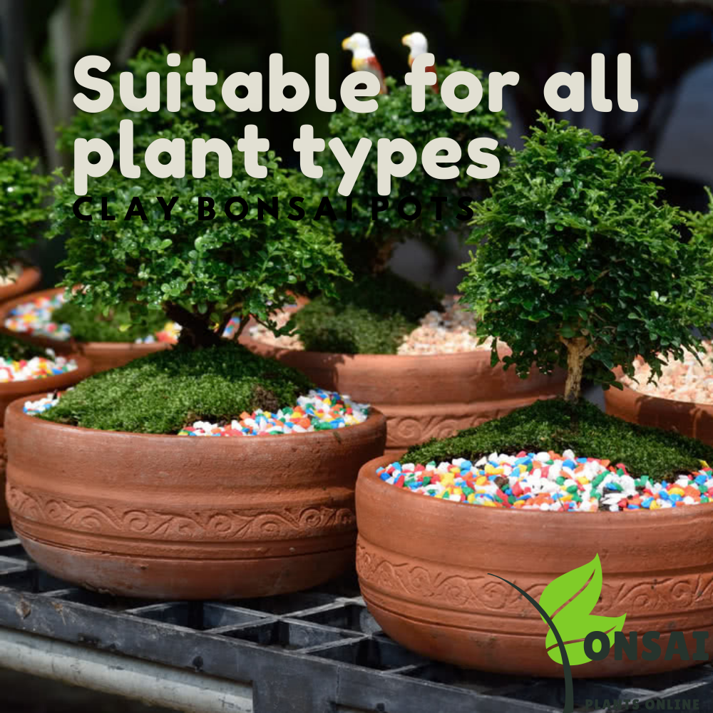 Affordable and durable clay bonsai pots