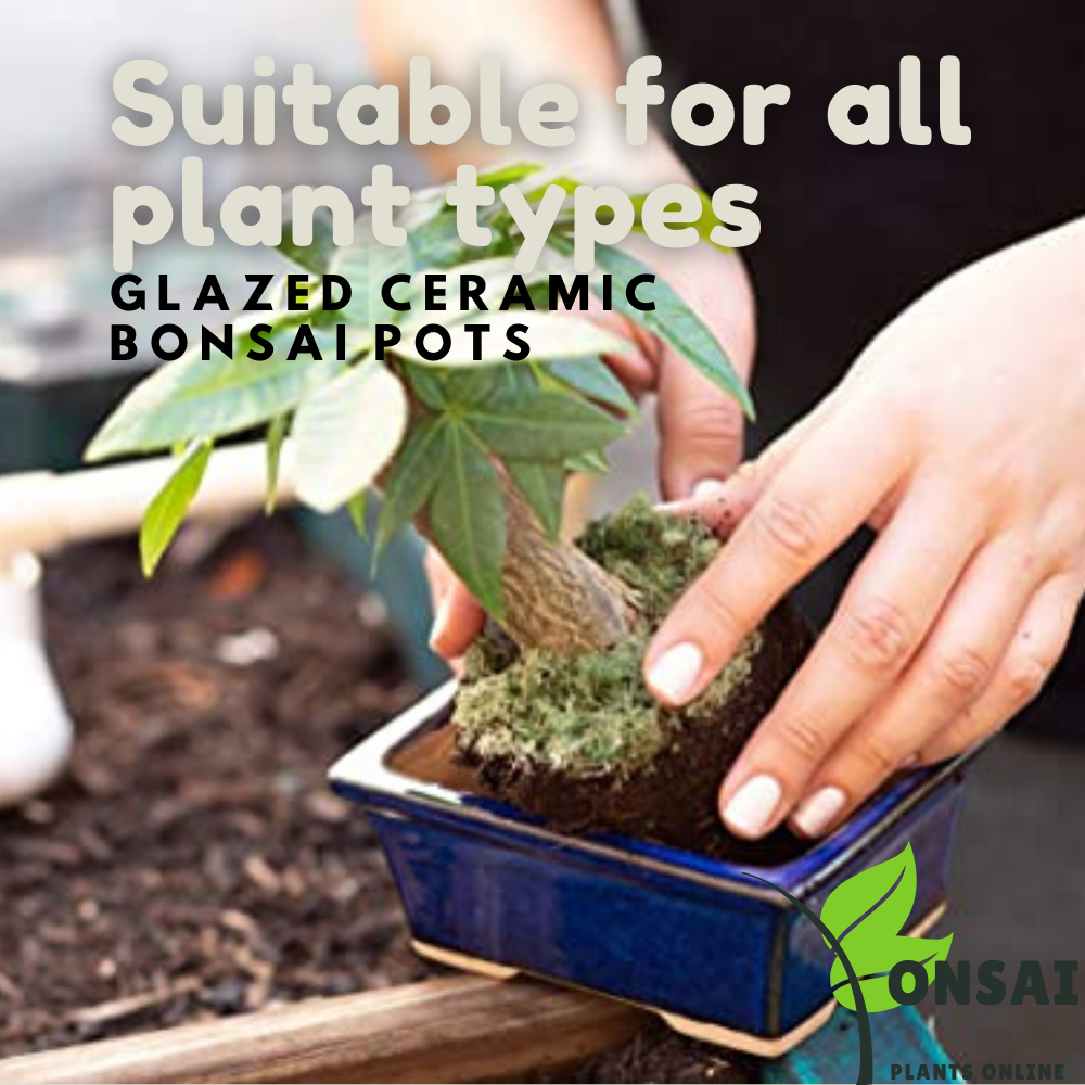 Beautifully glazed ceramic pots for outdoor and indoor bonsai plants