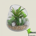 Get the beautifully elegant glass bonsai pots online