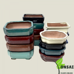 Get the beautifully glazed ceramic pots for bonsai