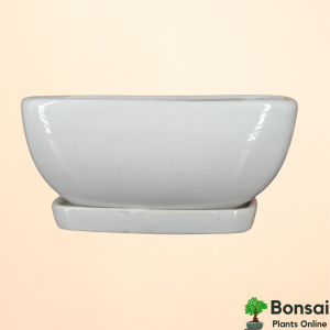 Get this beautiful ceramic bonsai pot with watering tray